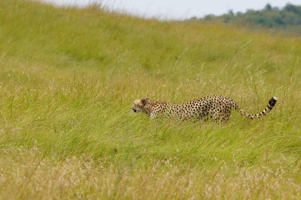 ケニア旅行5日目-旅行記