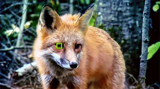 α6400は動物瞳AF対応