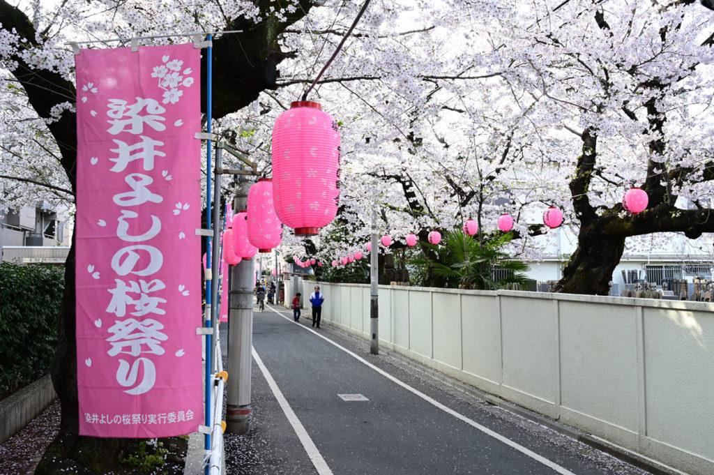 駒込小学校の前の通りも見ごたえあり