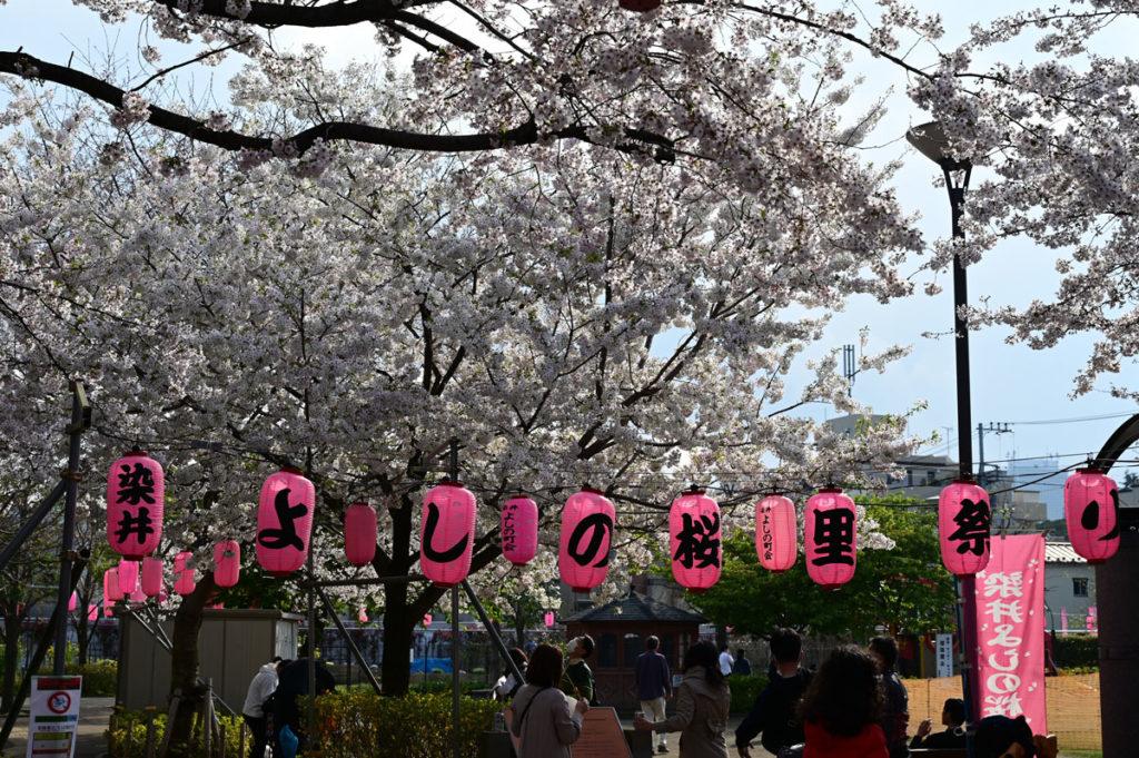 染井よしの桜里祭り