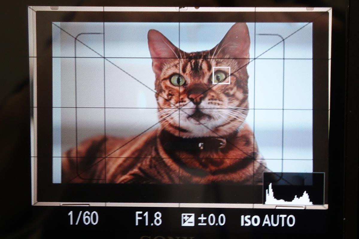 ネコの瞳にAFしてくれました