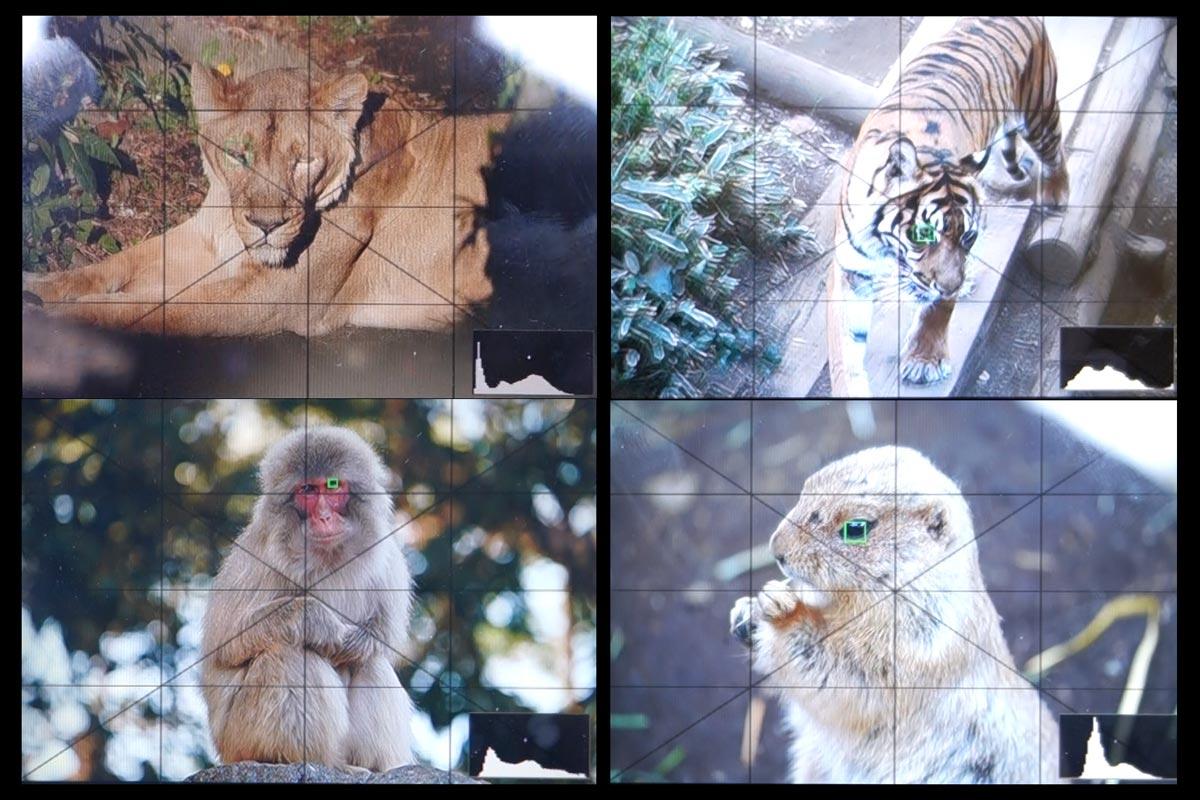 ソニーの動物瞳AF
